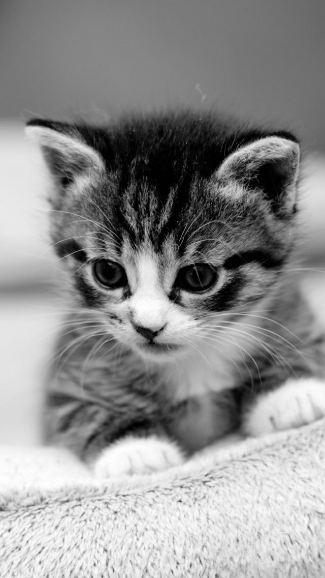 Us Iphone Cat Wallpapers Retina Display Hd Backgrounds PIC