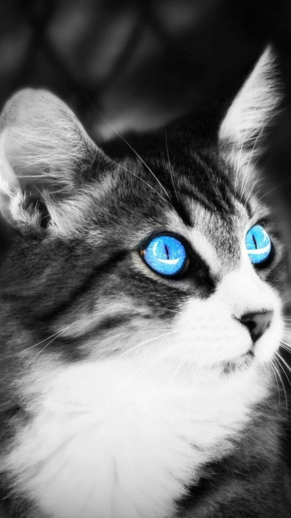 w-PIC-MCH0110810-576x1024 Hd Cat Wallpapers Iphone 41+