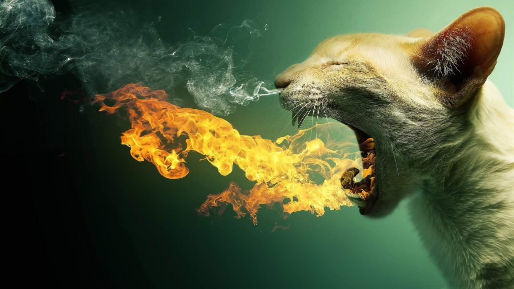 wallpaper-funny-flaming-cat-PIC-MCH0111865-1024x576 Crazy Cool Awesome Wallpapers 48+