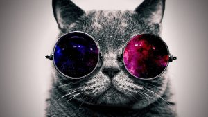 Hd Wallpapers Cat With Gles 34+