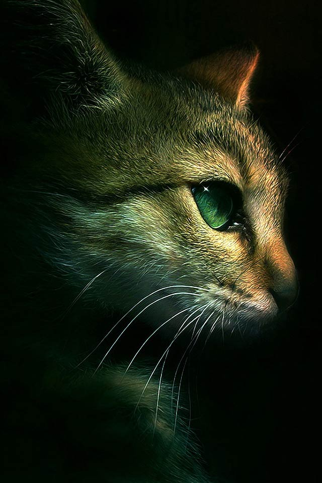 wallpaperyou-PIC-MCH0114684 Hd Cat Wallpapers Iphone 41+