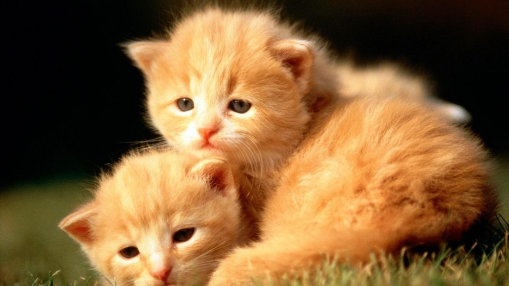 widescreen-cute-cat-wallpapers-x-PIC-MCH033383-1024x576 Hd Cat Wallpapers For Mobile 25+