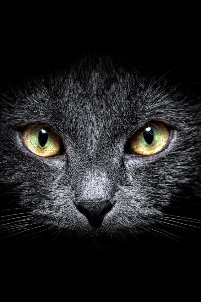 ws-Black-Cat-in-the-Dark-x-PIC-MCH0118710 Hd Cat Wallpapers Iphone 41+