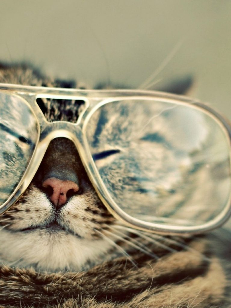 ws-Funny-Cat-with-Glasses-x-PIC-MCH0119019-768x1024 Hipster Cat Wallpaper Hd 36+