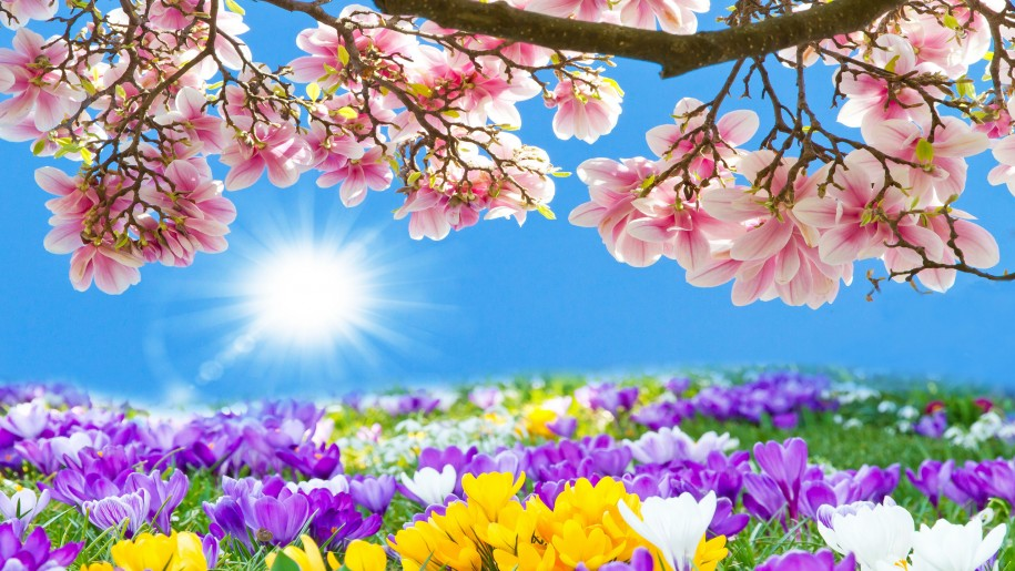 Amazing-Flower-HD-Wallpapers-PIC-MCH039717 Amazing Flower Wallpapers 38+