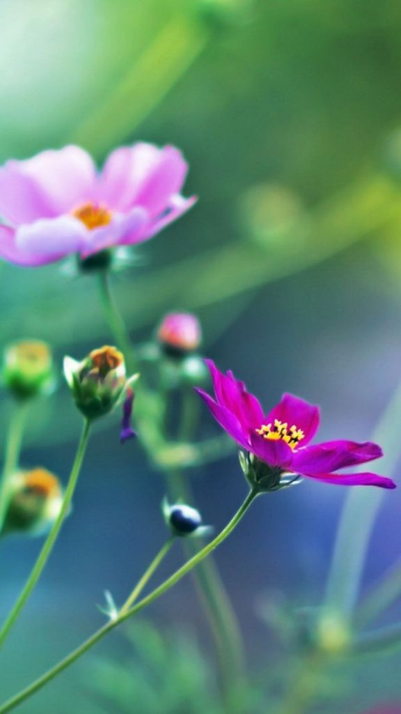Desktop-For-Flowers-Mobile-Flower-Wallpaper-Best-Of-Hd-Images-Pc-PIC-MCH058095-576x1024 Pretty Flower Wallpapers For Android 24+
