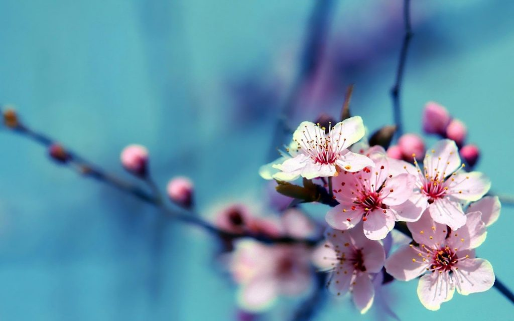 HD-Beautiful-Flowers-Wallpapers-PIC-MCH071632-1024x640 Pretty Spring Flowers Wallpapers 37+