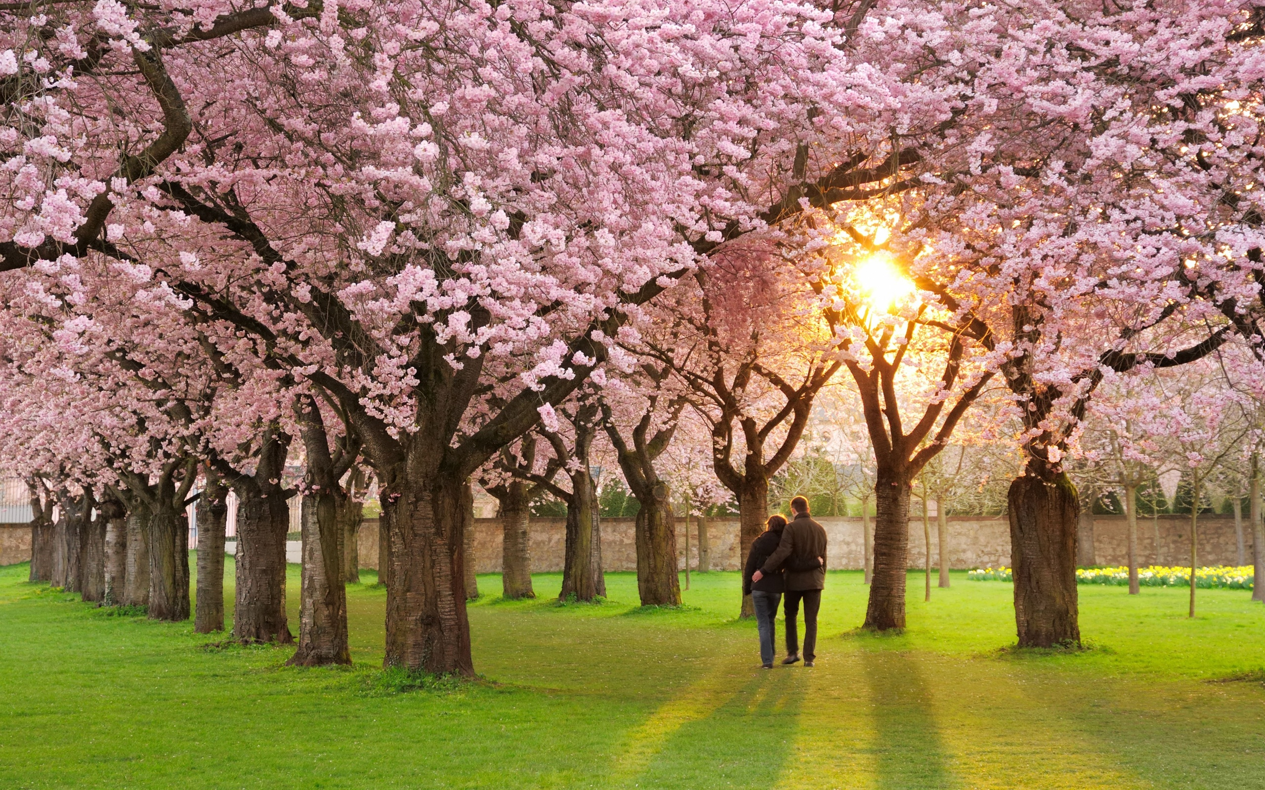 Nature Seasons Spring Beautiful Spring Flowers In The Park Pic