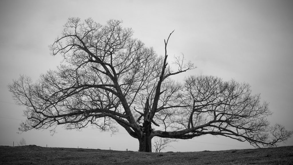 Old-Tree-Black-and-White-Wallpapers-HD-hd-wallpapers-high-definition-amazing-cool-apple-mac-tablet-PIC-MCH092134-1024x576 Mac Wallpaper Hd Black And White 32+