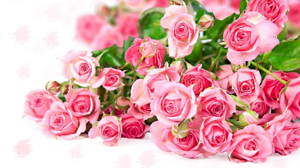 PIC-MCH01904-1024x576 Amazing Flower Wallpapers 38+