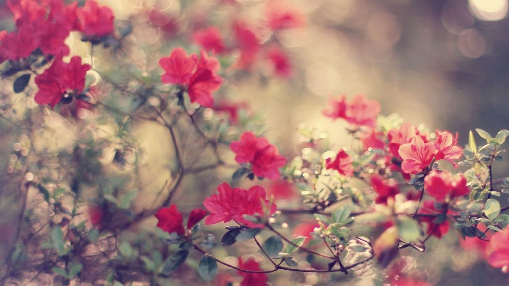 PIC-MCH03469-1024x576 Amazing Flower Wallpapers Hd 26+