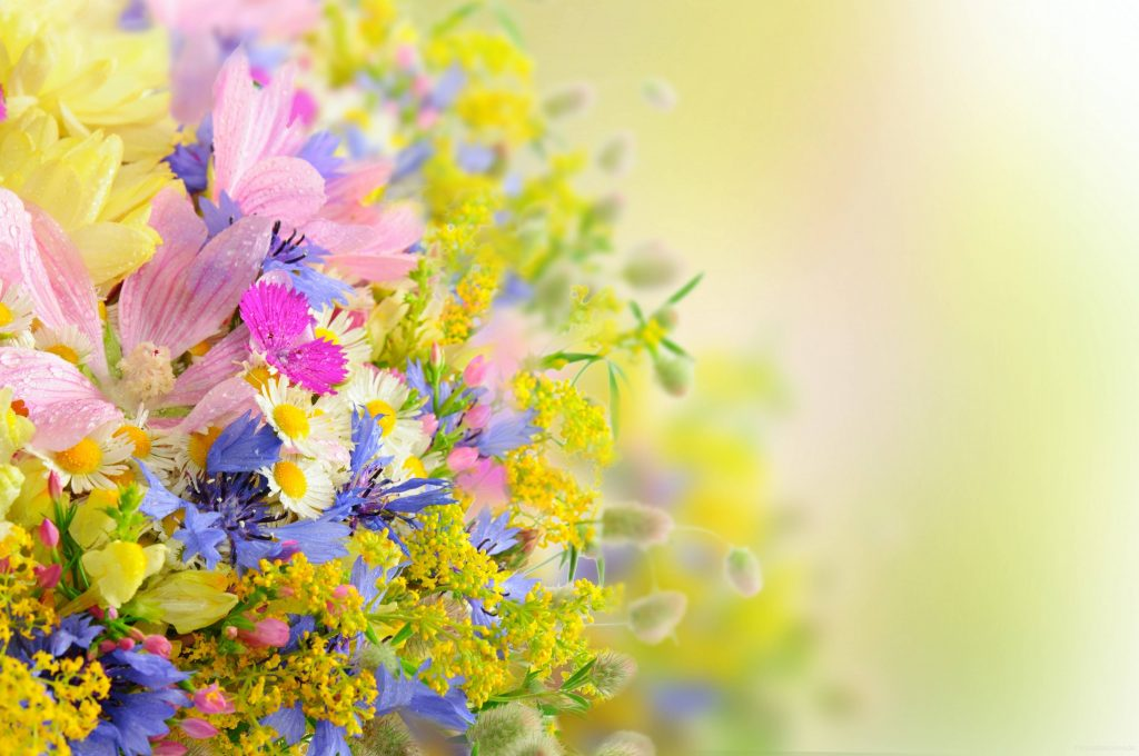 RAzjzFh-PIC-MCH097850-1024x680 Pretty Flower Wallpapers For Android 24+