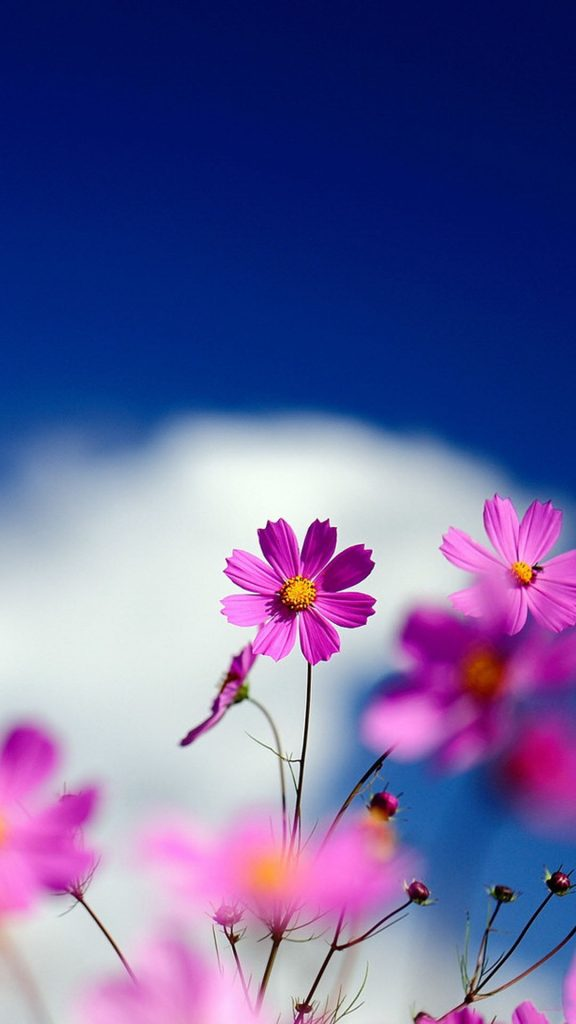 Wallpaper-for-android-phones-Flowers-x-PIC-MCH0111746-576x1024 Pretty Flower Wallpapers For Android 24+