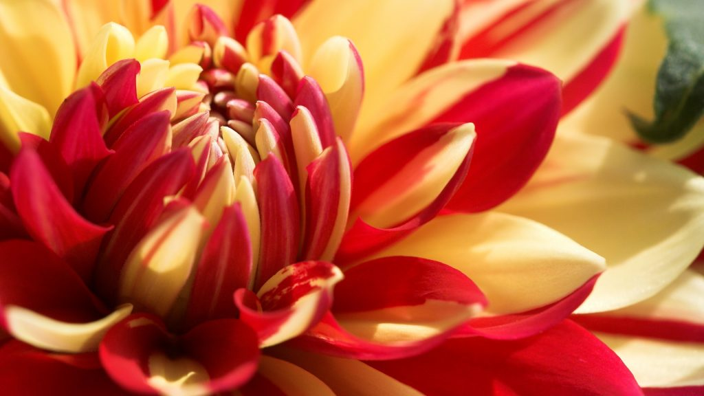 beautiful-d-flowers-wallpapers-PIC-MCH044668-1024x576 Amazing Flower Wallpapers Hd 26+