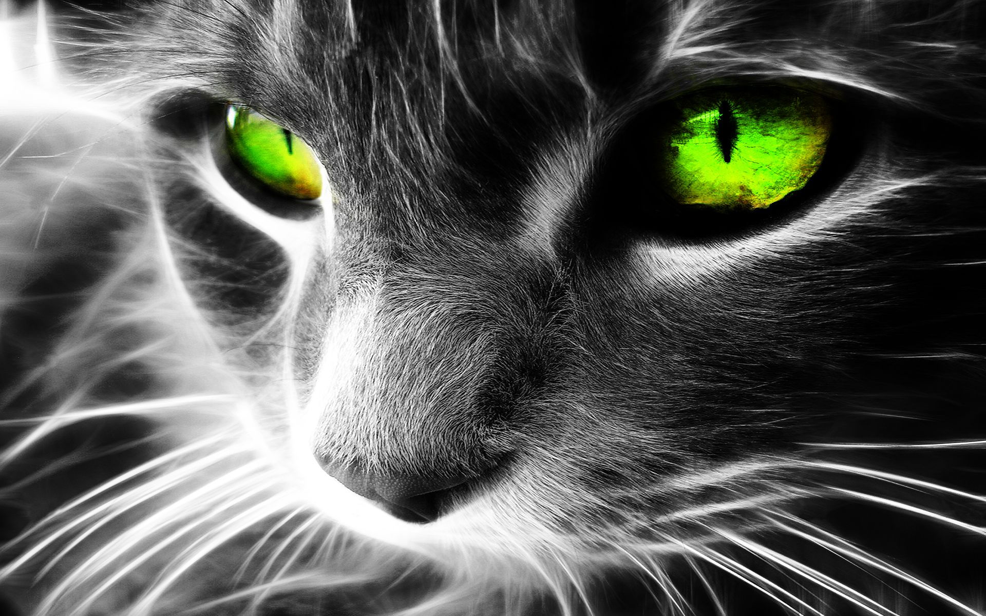 Cool Neon Green Wallpapers 48