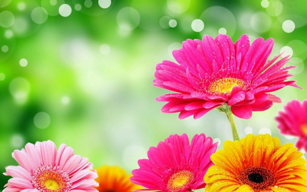 bright-flower-hd-PIC-MCH049639-1024x640 Amazing Flower Wallpapers Hd 26+
