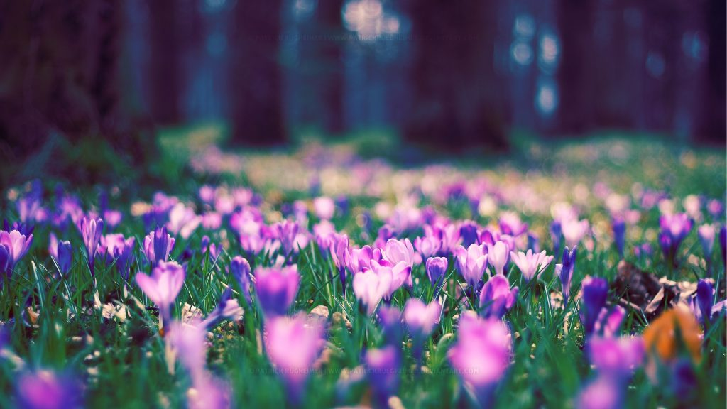 downloadfiles-wallpapers-spring-flower-park-PIC-MCH060517-1024x576 Pretty Spring Flowers Wallpapers 37+