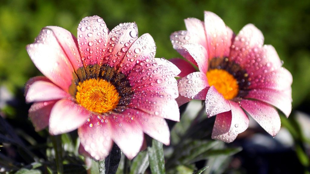 flower-images-hd-PIC-MCH018608-1024x576 Amazing Flower Wallpapers 38+