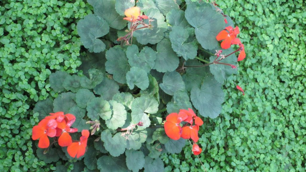 flowers-amazing-red-day-garden-green-photography-leaves-edmonton-wallpaper-flower-scenery-x-PIC-MCH064309-1024x576 Pretty Flower Wallpapers For Android 24+