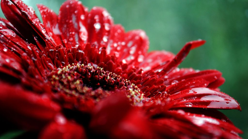 flowers-hd-wallpaper-PIC-MCH064354-1024x576 Amazing Flower Wallpapers Hd 26+