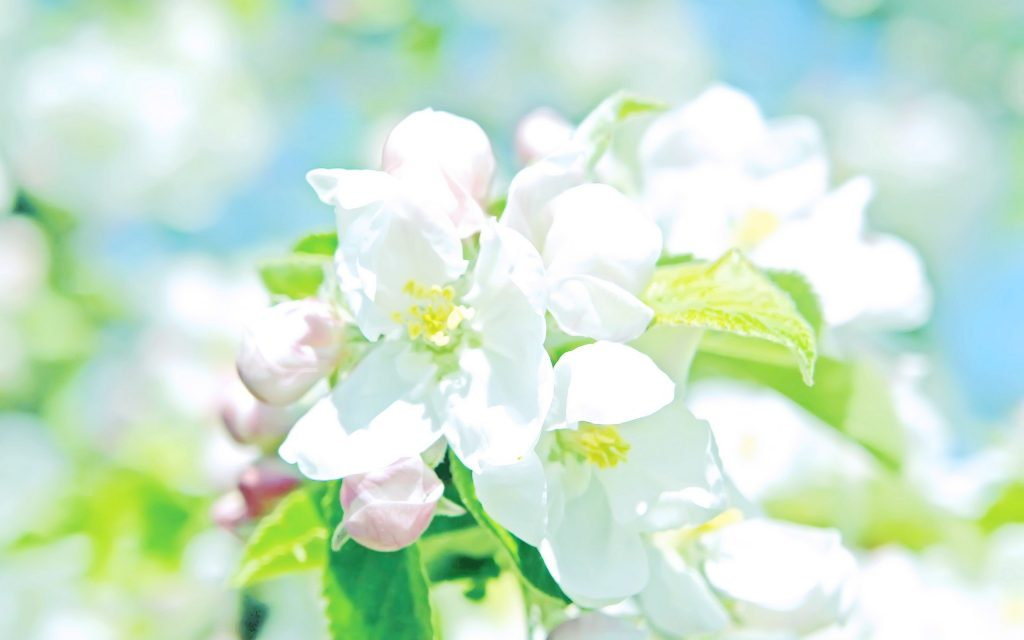 flowers-white-wallpapers-flower-wallpaper-images-PIC-MCH064433-1024x640 Pastel Wallpapers For Android 17+