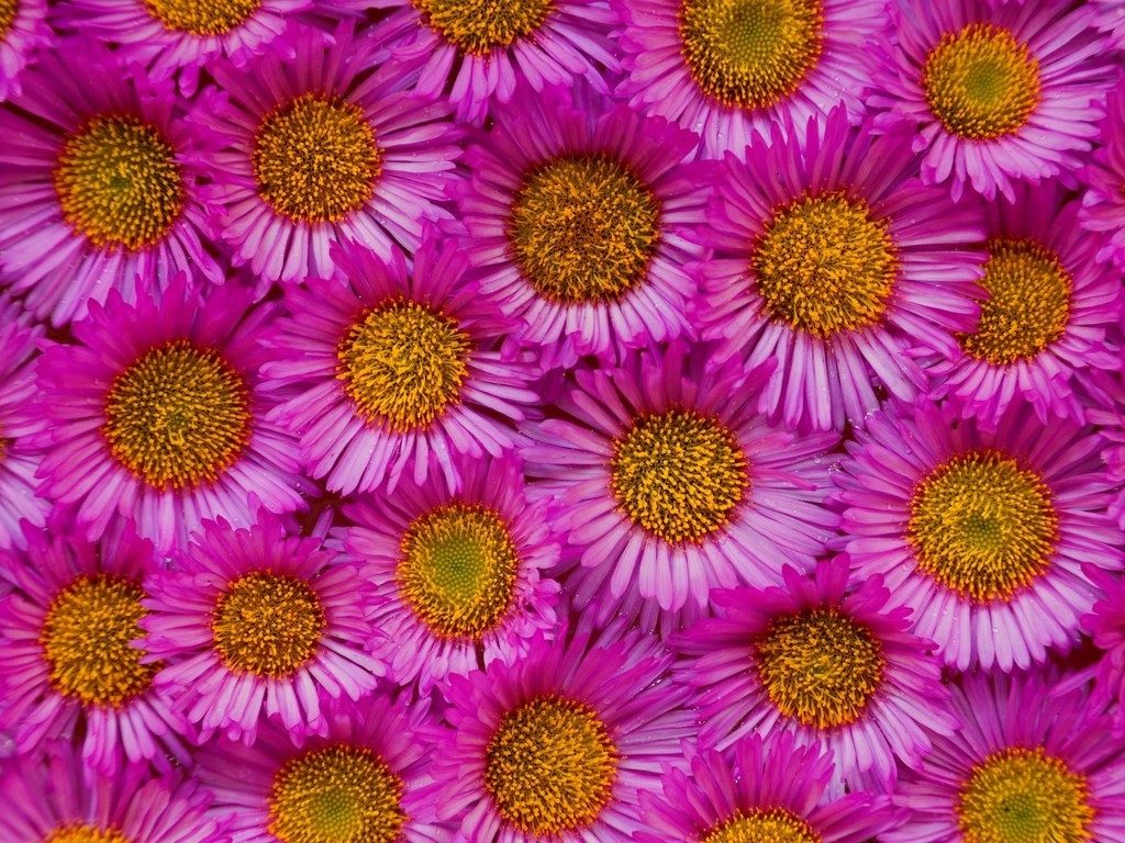 flowers-yellow-pink-pretty-flower-wallpaper-for-sony-xperia-PIC-MCH064435-1024x768 Pretty Flower Wallpapers For Android 24+