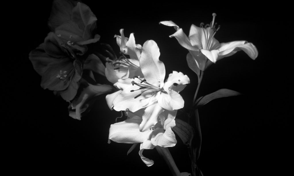 free-hd-mac-black-white-flower-images-wallpapers-download-PIC-MCH065358-1024x614 Mac Wallpaper Hd Black And White 32+