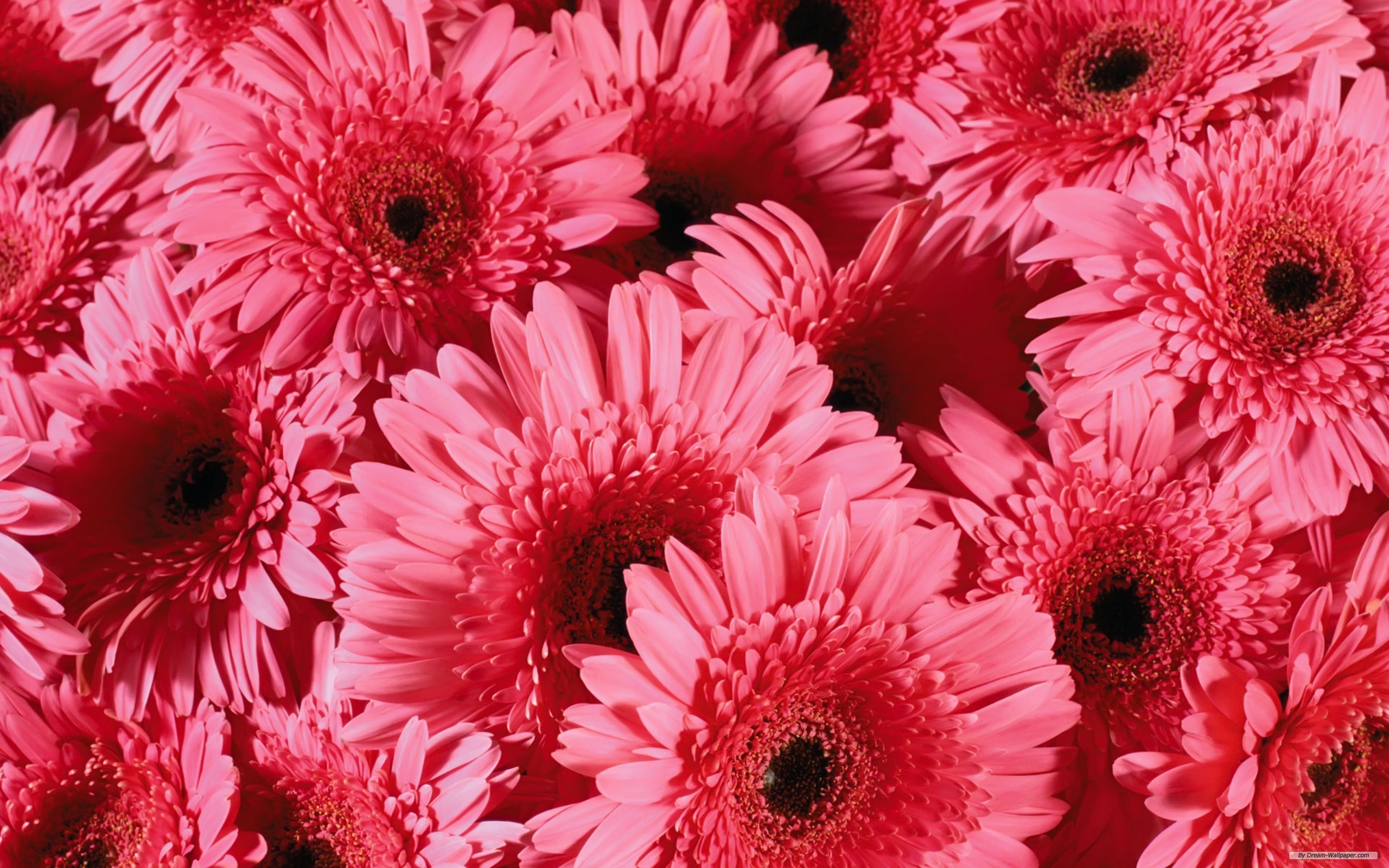 Pretty flower wallpapers for android 24 dzbc mightylinksfo