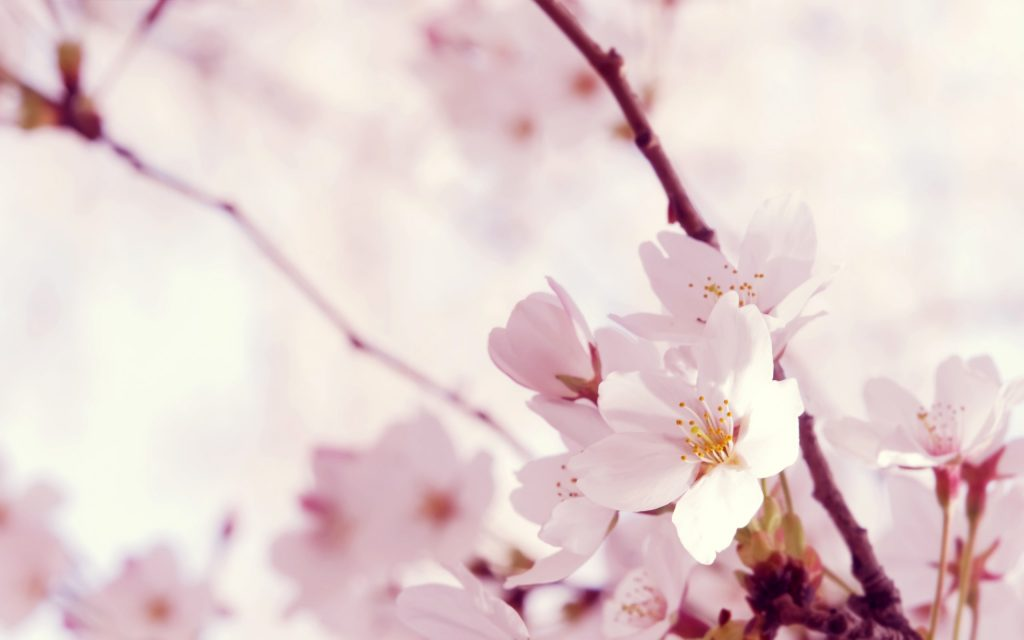 gorgerous-pretty-flower-background-x-macbook-PIC-MCH030485-1024x640 Pretty Flower Wallpapers For Android 24+