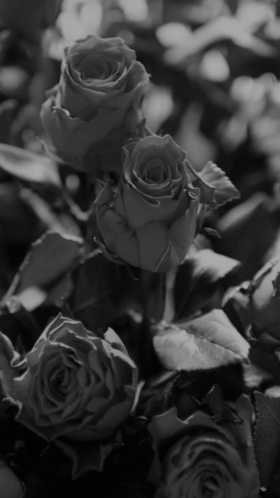 papers.co-ms-rose-flower-gift-red-nature-dark-bw-iphone-plus-wallpaper-PIC-MCH093551-576x1024 Black Rose Iphone Wallpaper Hd 34+