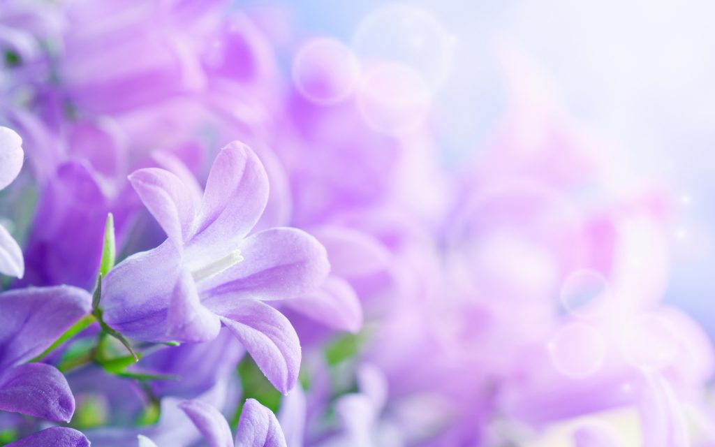 pretty-flower-wallpaper-x-p-PIC-MCH036982-1024x640 Pretty Flowers Wallpapers 32+
