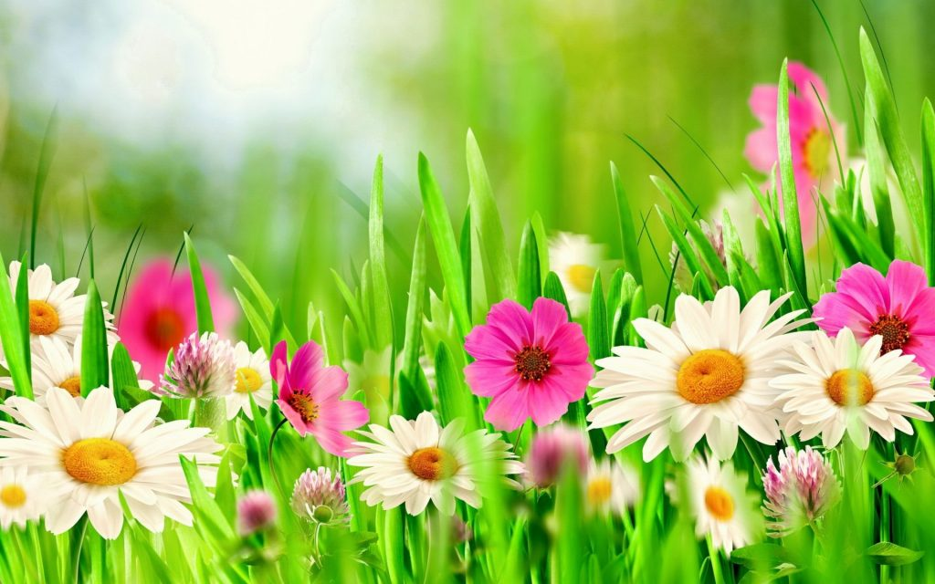 spring-flowers-backgrounds-PIC-MCH0103507-1024x640 Pretty Spring Flowers Wallpapers 37+