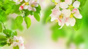 Pretty Spring Flowers Wallpapers 37+