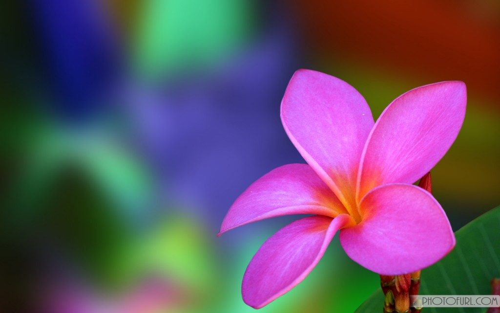 wide-screen-flower-wallpaper-x-PIC-MCH0116436-1024x640 Amazing Flower Wallpapers 38+