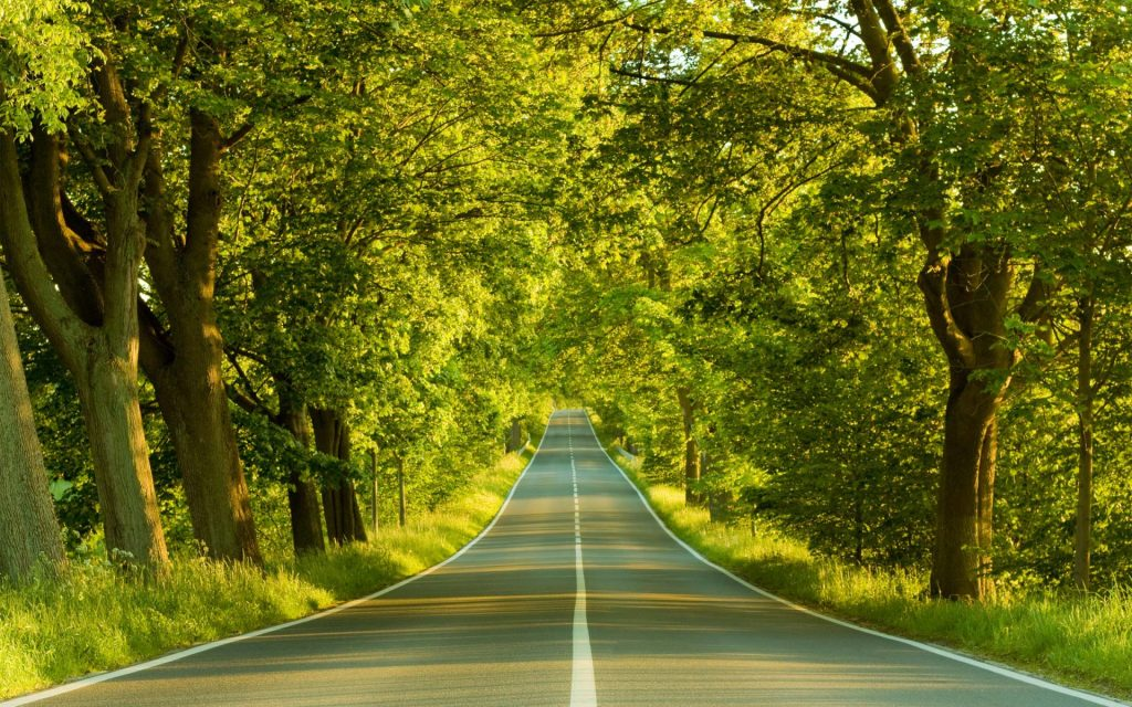 woods-through-road-nature-screensavers-gallery-wallpapers-PIC-MCH0117337-1024x640 Gallery Wallpaper Images 23+