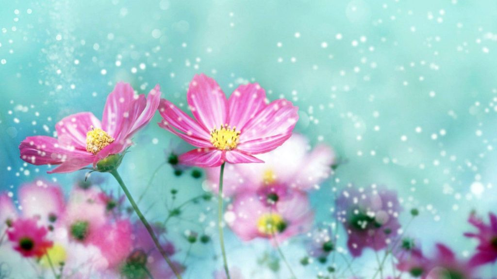 wp-PIC-MCH0118116-1024x576 Amazing Flower Wallpapers Hd 26+